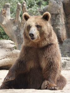 bear-1666306_1920